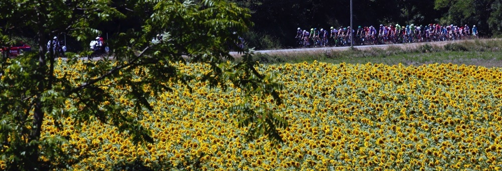 Cycling - The Tour de France cycling race - The 208.5-km (129.5 miles) Stage 14 from Montelimar to Villars-les-Dombes, Parc des Oiseaux, France - 16/07/2016 - The pack of riders cycles during the stage. REUTERS/Jean-Paul Pelissier - RTSIAW3